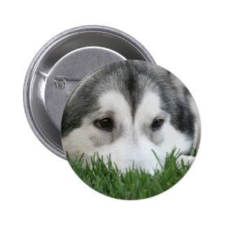 Sleeping Husky Round Button