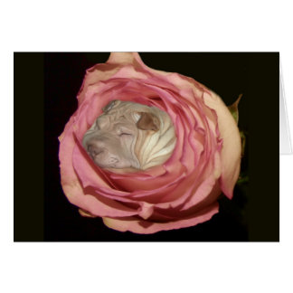 Sleeping in a Pale Pink Rose, Chinese Shar Pei Dog Card