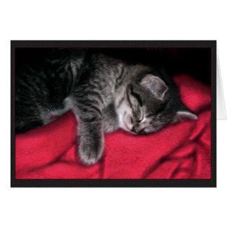 Sleeping Kitten Card
