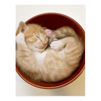Sleeping kitten in simple red bowl on white postcard