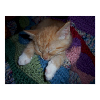 Sleeping Kitten on Colorful Afghan Poster