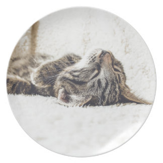 Sleeping Kitten Plate