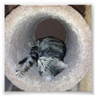 Sleeping Kitty Photographic Print