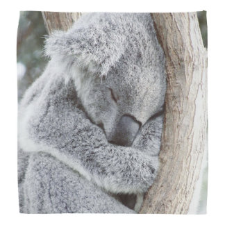 sleeping koala baby2 bandana