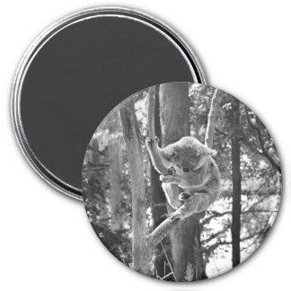 Sleeping Koala Bear ~ Magnet
