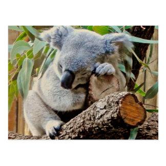 Sleeping Koala Bear Postcard