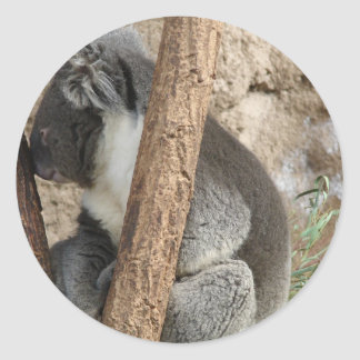 Sleeping Koala Classic Round Sticker