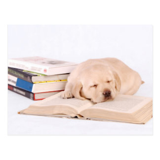 Sleeping Lab Postcard