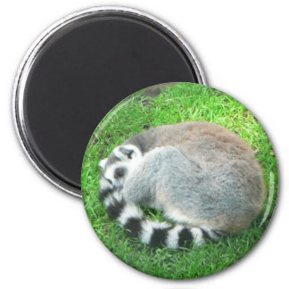 Sleeping Lemur On Grass 2 Inch Round Magnet