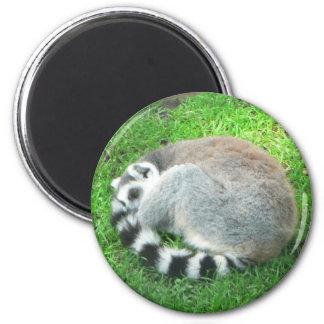 Sleeping Lemur On Grass Magnet
