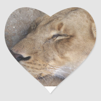 Sleeping Lioness Heart Sticker