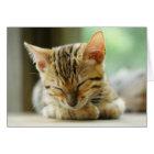 Sleeping Little Baby Kitty Card