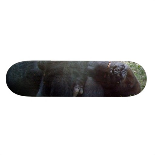 Sleeping Lowland Gorilla Kansas City Zoo Skateboards