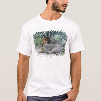 sleeping male lion and lioness, Panthera leo, T-Shirt