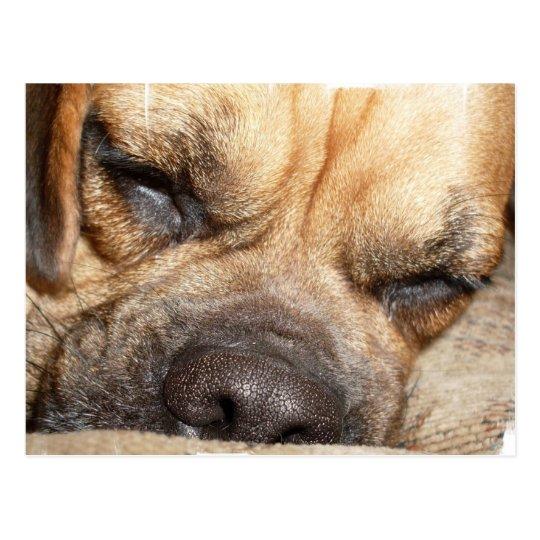 Sleeping Mastiff  Postcard