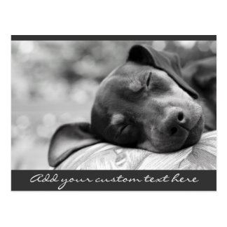 Sleeping Miniature Pinscher dog Postcard
