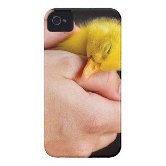 Sleeping newborn duckling in human hands iPhone 4 covers