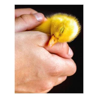 Sleeping newborn duckling in human hands letterhead