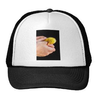 Sleeping newborn duckling in human hands trucker hat