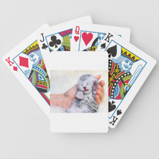 Sleeping newborn  silver tabby cat in hand bicycle playing cards