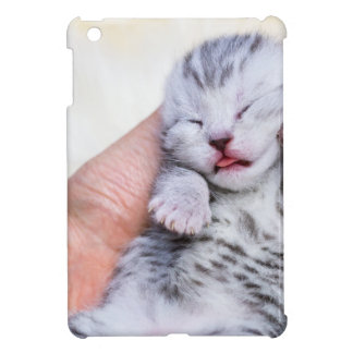 Sleeping newborn  silver tabby cat in hand case for the iPad mini