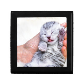 Sleeping newborn  silver tabby cat in hand gift box