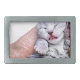 Sleeping newborn  silver tabby cat in hand rectangular belt buckle