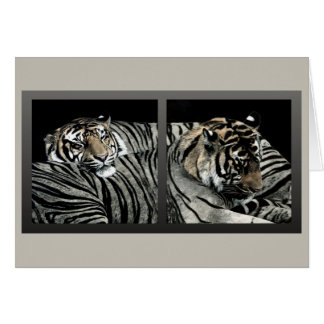 """Sleeping Patterns"" - Tiger Card"