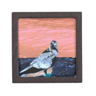 sleeping pied pigeon coral wall blue river invert premium trinket box