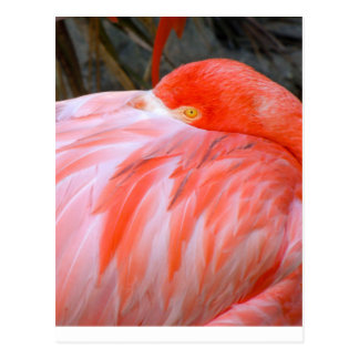 Sleeping Pink Flamingo Postcard