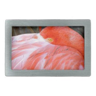 Sleeping Pink Flamingo Rectangular Belt Buckles