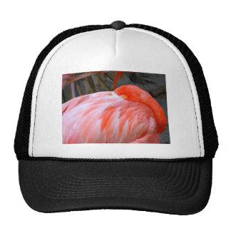 Sleeping Pink Flamingo Trucker Hat
