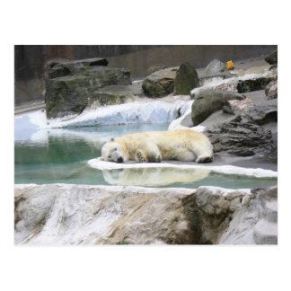 Sleeping Polar Bear Postcard