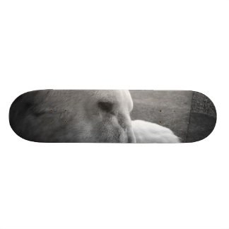 Sleeping Polarbear Skateboard Decks