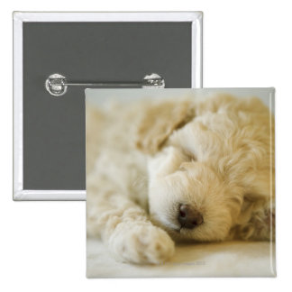 Sleeping Poodle puppy 2 2 Inch Square Button