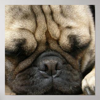Sleeping Pug Poster Print