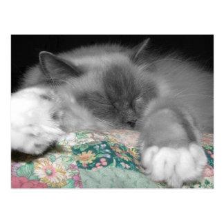 Sleeping Ragdoll Postcard