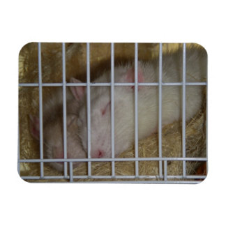 Sleeping Rats Flexi Magnet