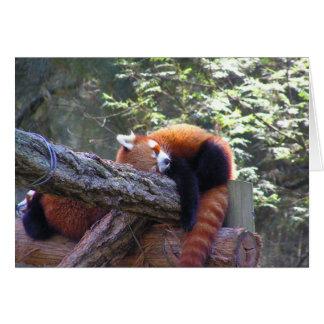 Sleeping Red Panda Card
