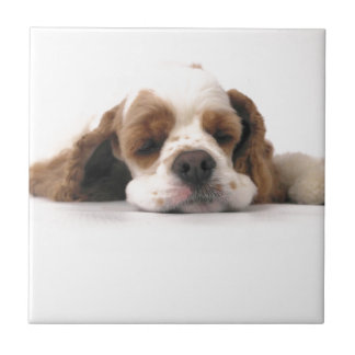 Sleeping Red/White Cocker Spaniel Tile