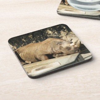 Sleeping Rhino Coasters