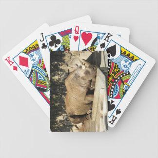 Sleeping Rhino Poker Deck