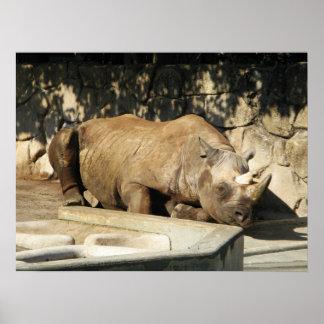 Sleeping Rhino Poster