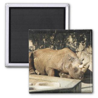 Sleeping Rhino Square Magnet