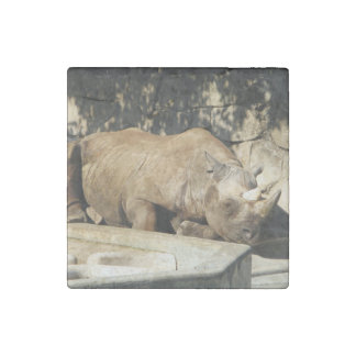 Sleeping Rhino Stone Magnets