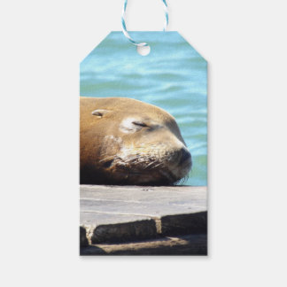 SLEEPING SEA LION PACK OF GIFT TAGS
