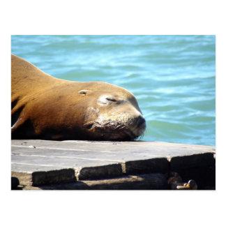 SLEEPING SEA LION POSTCARD
