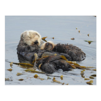 Sleeping sea otter mom and pup postcard