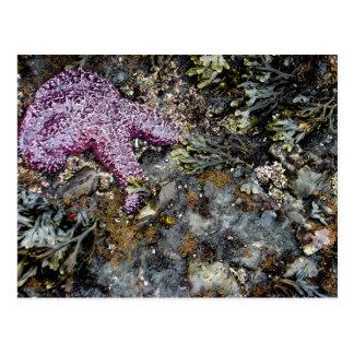 Sleeping Sea Postcard
