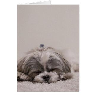 Sleeping Shih tzu Greeting Card, Sleeping Dog Card